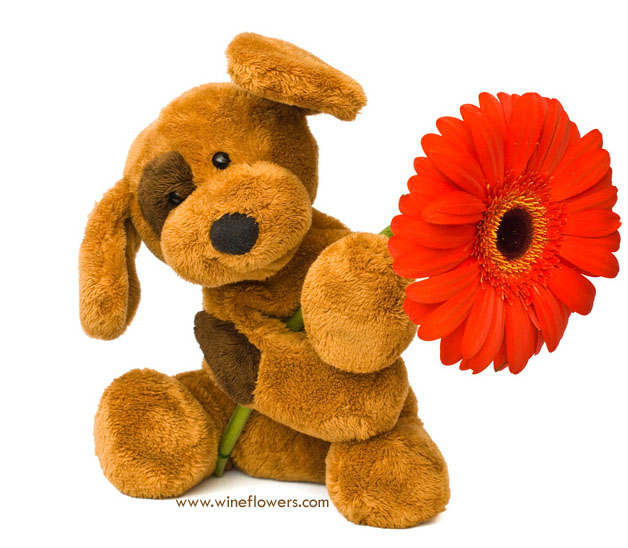 teddy bear and gerbera