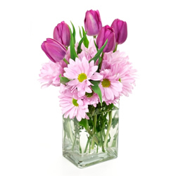 pink tulips and gerberas