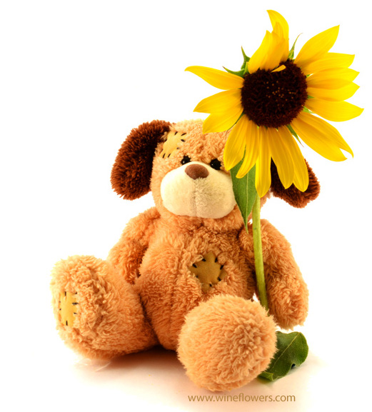 sunflower and teddy bear